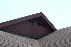 Raccoon looking out a gable vent. Raccoon Trapping candidate.